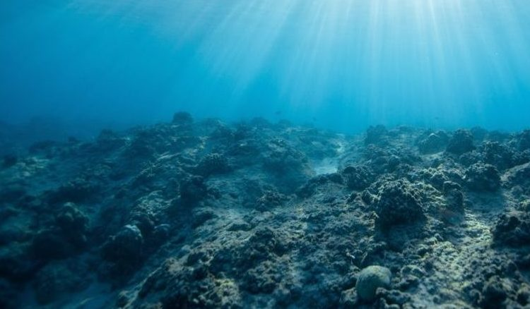 climate change dying coral reef